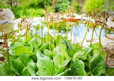 Green leaves on garden pond background