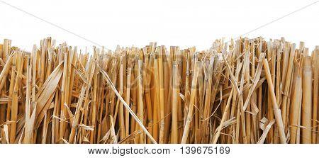 Dry straw on white background