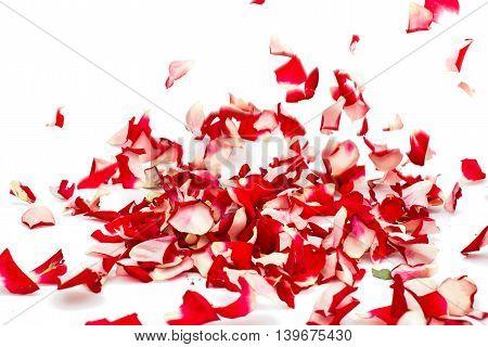 rose petals celebration, confetti on white background