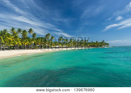 Coconut palm trees on the Caravelle beach in Sainte Anne, Guadeloupe, Caribbean