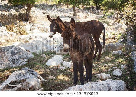 two little donkey among the white rocks