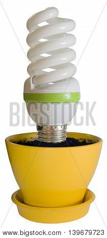 economical bulb growing in a yellow flower pot