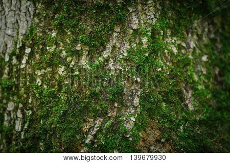 Old tree trunk texture background