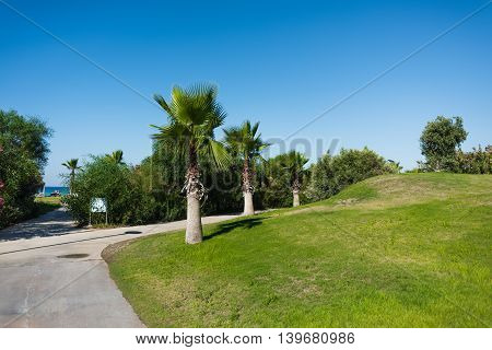 Walkway with access to the sea, with bushes and palm trees near the grass field under the blue sky