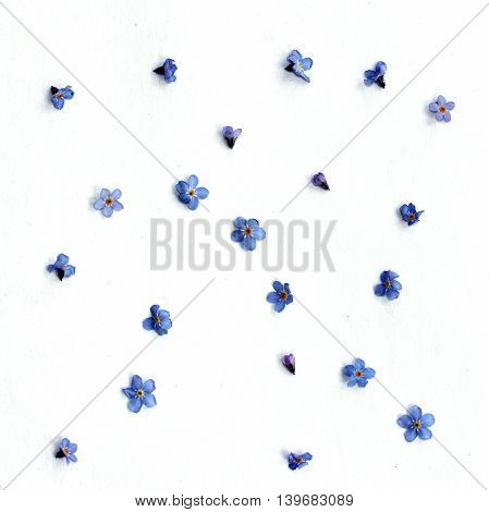 pattern of small blue spring flowers top view