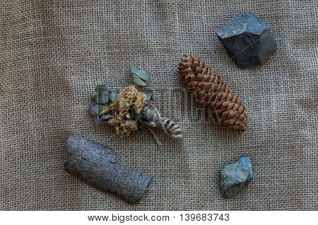 Details of the forest - the rocks pine cone bark.