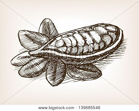 Cocoa bean plant sketch style vector illustration. Old engraving imitation.