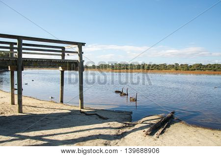 Three black swans in Bibra Lake swimming past the wooden pier with wetland trees under a blue sky in Western Australia.