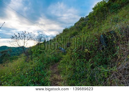 Trail On Sub Alpine Mountains In Tropical Rainforest