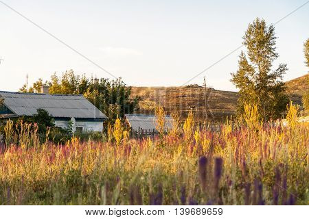 Weedy grasses herbs and forbs village house and trees summer evening