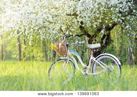 retro bicycle picnic under a blossoming tree in the Spring / spend a weekend in nature