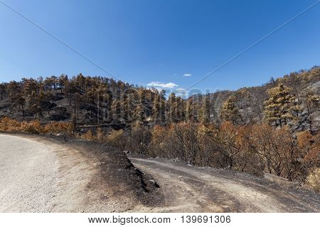 Burned Forest Following A Forest Fire In Troodos,cyprus