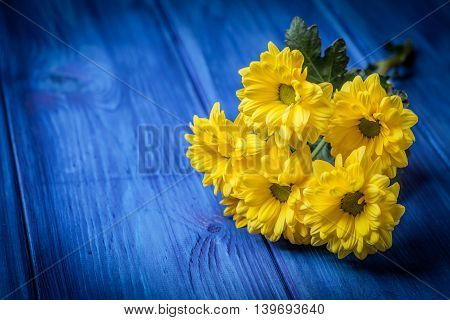 Yellow chrysanthemum flowers on a blue wooden table. Copy space.