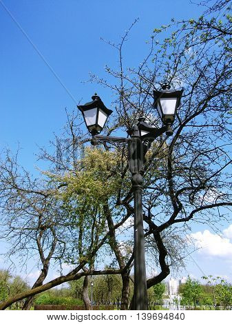 Vintage streetlight amidst blooming branches of bird-cherry trees