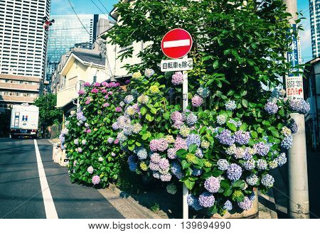 Tokyo - May 2016: Small lane with Ajisai flowers and traffic sign.