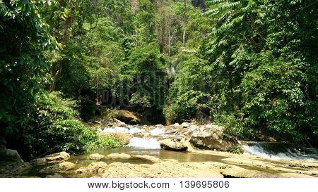 Maple trees,waterfall , Big Tree in Nation Park that a tourist attraction of Thailand.