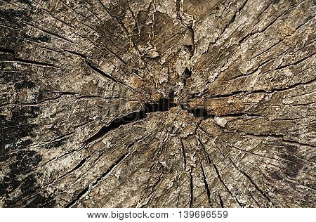 Aged tree stump texture with old cracks