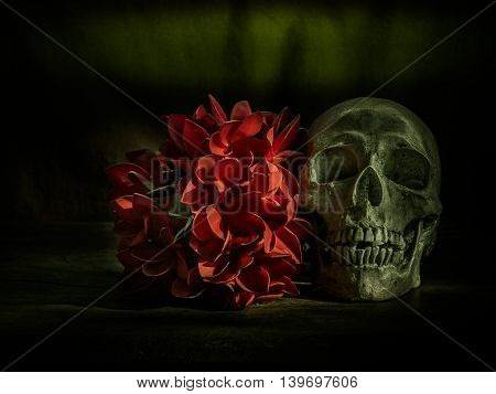 Still life with human skull and flowers on dark background