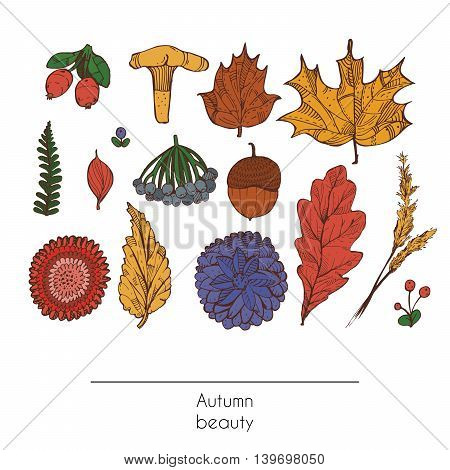 Hand drawn autumn beautiful set of leaves flowers branches mushroom and berries isolated on white background. Colorful illustration showing autumn beauty of nature with graphic decorated objects.