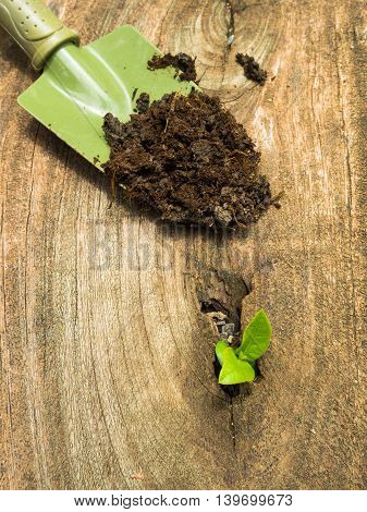 Sapling of a tree growth out of dried wood