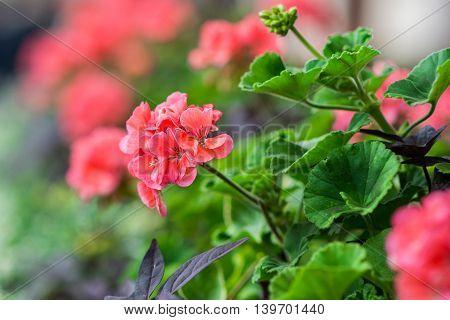 red flower bloom in a green garden