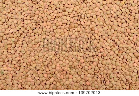 green lentil plant dry seeds texture pattern