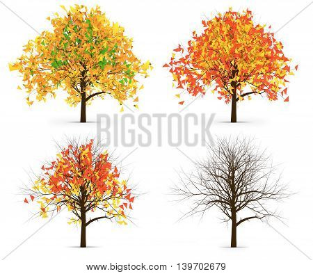 Four Autumn Trees Leaves Color Variation