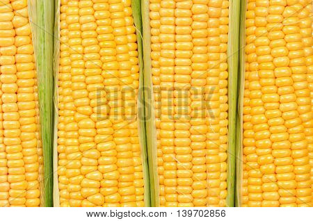 Organic yellow corn. Background. selective focus. food