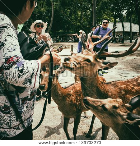 Nara - July 2016: Tourists feeding Sika deers by deer crackers. Nara Park