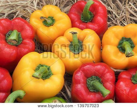 Group of sweet peppers/ Close up image