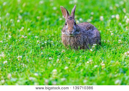 Rabbit looking surprised in a patch of grass.