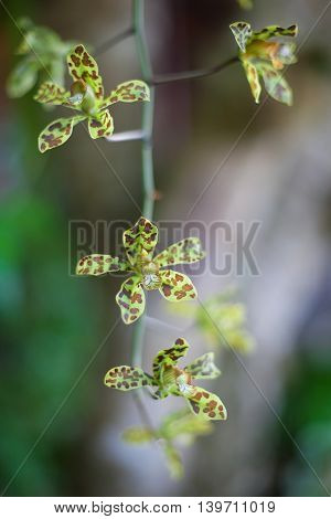 Photo Green Tropycal Orchid on the Blurred background. Wild Nature Flores. Vertical Picture