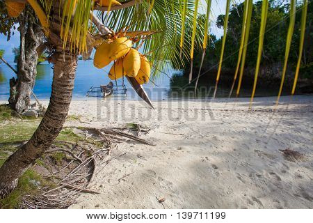 Photo Untouched Tropical Beach in Bali Island. Palm with fruits. Vertical Picture. Fishboat Blurred Background