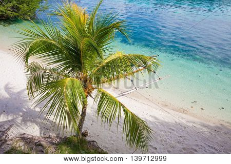 Photo Natural Wood Long Tail Boat Parked Caribbean Ocean Beach Island. Clear blue water Palm Background. Horizontal