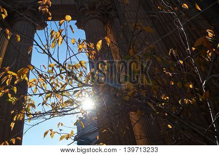 The Sun Shining Through Some Trees and Pillars in the Fall