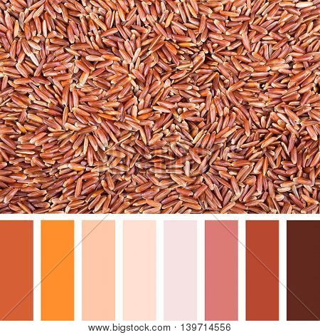 A background of red Camargue rice In a colour palette with complimentary colour swatches.