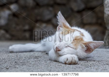 Shot of a young cat sleeping outside
