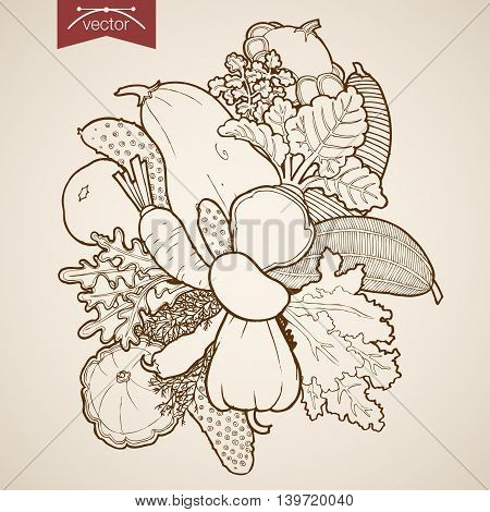 Engraving vintage hand drawn vector fruit zucchini beet Sketch