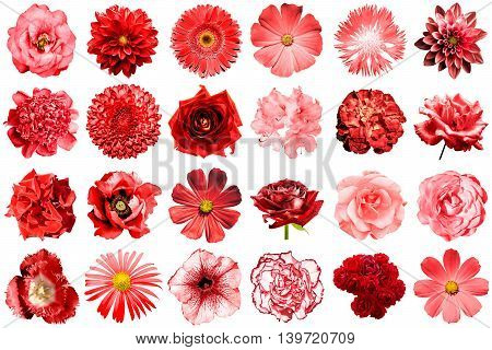 Mix Collage Of Natural And Surreal Red Flowers 24 In 1: Peony, Dahlia, Primula, Aster, Daisy, Rose,
