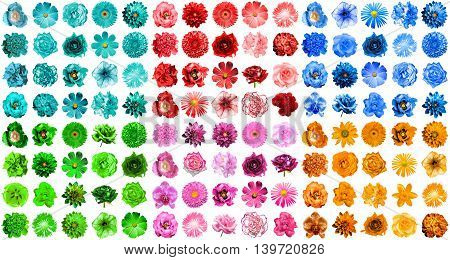 Mega Pack Of 120 In 1 Natural And Surreal Blue, Orange, Red, Green, Turquoise And Pink Flowers Isola