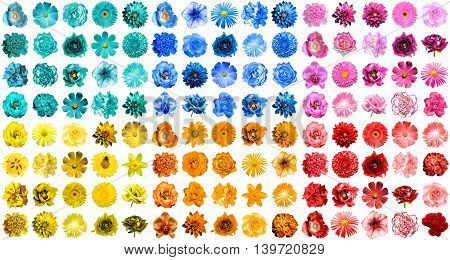 Mega Pack Of 120 In 1 Natural And Surreal Blue, Orange, Red, Yellow, Turquoise And Pink Flowers Isol