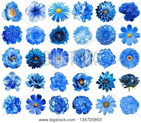 Collage Of Natural And Surreal Blue Flowers 30 In 1: Peony, Dahlia, Primula, Aster, Daisy, Rose, Ger