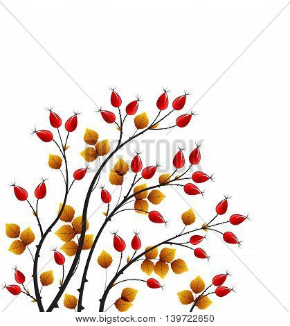 Vector illustration rose hip, colorful autumn bush