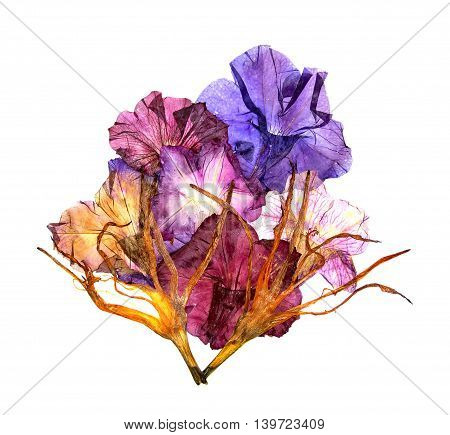 bizarre curved extruded dried lily petals. Petunia flower blue violet burgundy.