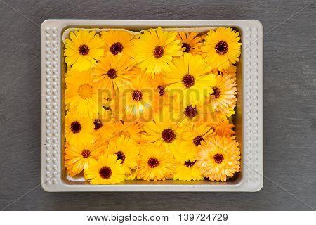 Bright Yellow Orange Flower Heads Pot Marigold Calendula Officinalis