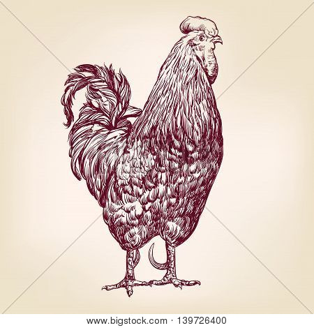 chicken hand drawn vector llustration realistic sketch