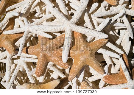 many white  and beige starfishes as background