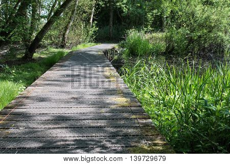 The path through the forest in the vicinity of Lough Neagh, Craigavon, Northern Ireland