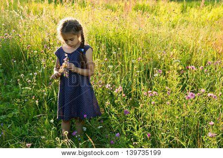 Little girl picking wild flowers on a field