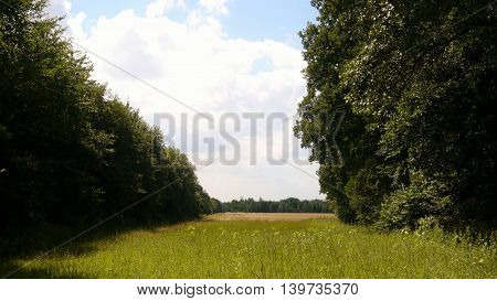 meadow field grassland grass forest pasture forest weed